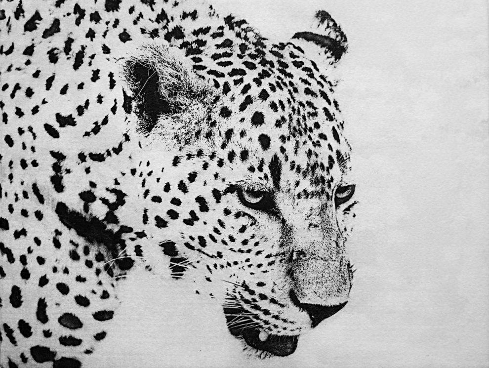Portfolio Image Leopard 1